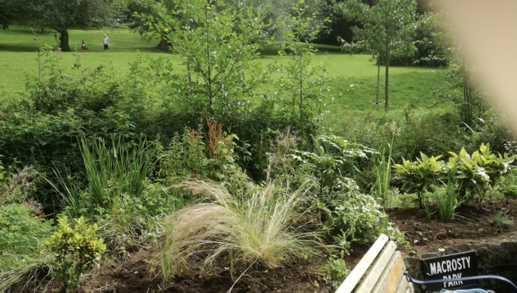 Our Weed Free SI Crieff Garden