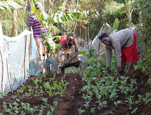 Meru Women S Garden Project In Kenya Si Grange Over Sands