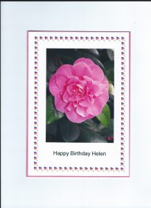 card showing bright pink camellia blossom