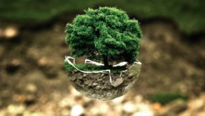 Image of a tree planted in a pot shaped like the Earth