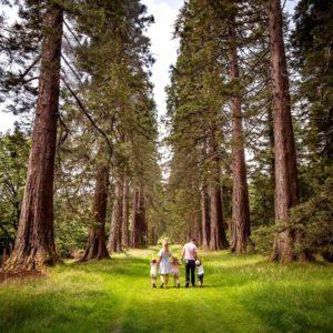 9 02 2021 Sequoia Avenue at Benmore Botanic Garden Rachel Keenan Photography