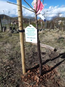 26 03 2021 Fruit Trees planted in the grounds of Castle View Primary School thanks to donation from SI Edinburgh.
